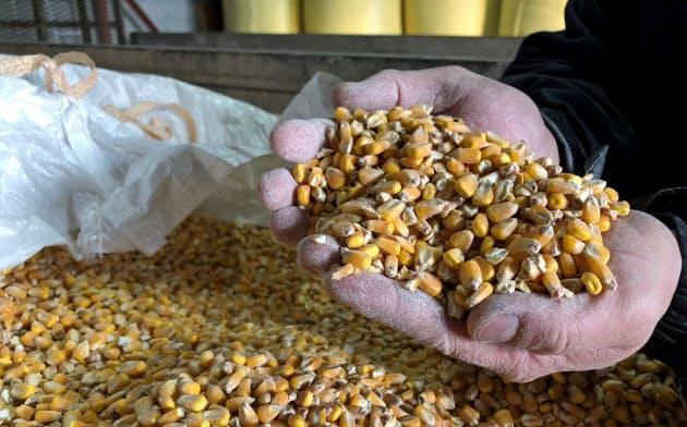 トウモロコシは飼料作物として農地の保全に寄与できる可能性がある(北海道長沼町)