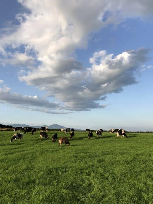山本牧場では完全放牧で牛を育てている