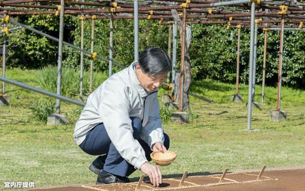 即位後初めて種もみまきをする天皇陛下(4月14日、皇居・生物学研究所脇の苗代)=宮内庁提供