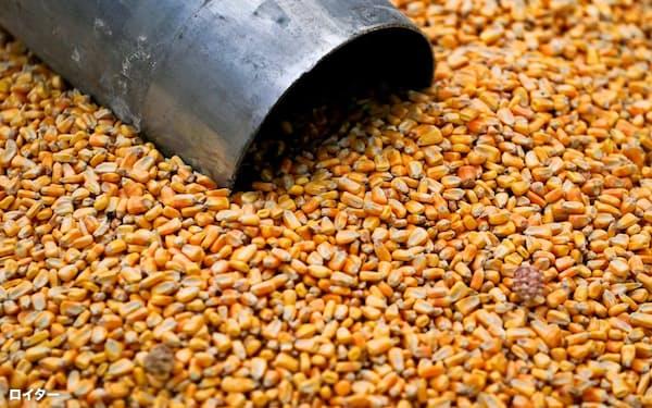 トウモロコシはバイオ燃料エタノールの原料になる=ロイター