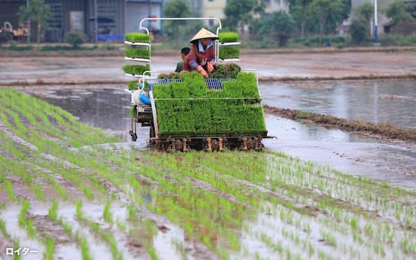 アリババは基金で就農者を支援する(写真は中国のコメ農家)=ロイター