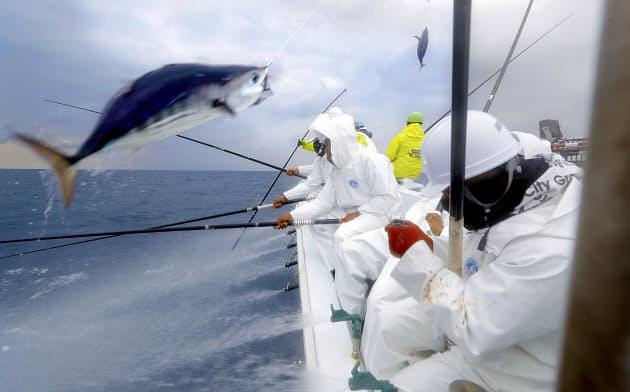 高知県土佐市のカツオ一本釣り漁船「光丸」で働くインドネシア人の技能実習生=横沢太郎撮影