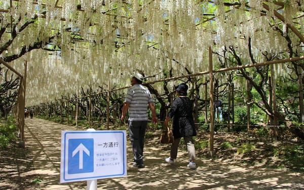感染予防のため、園内は一方通行の場所も設けた(11日、栃木県足利市)
