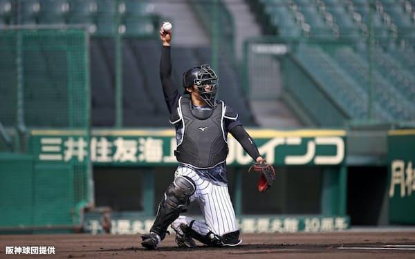 甲子園球場で自主練習する原口(8日)=阪神球団提供
