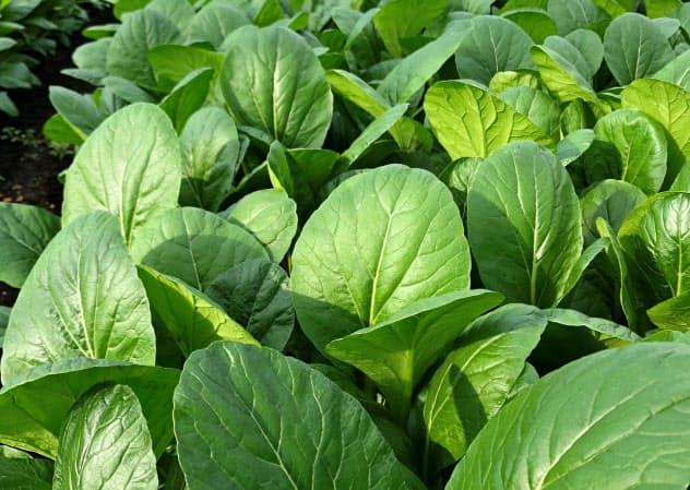 種苗法改正は優良品種の海外流出を防ぐことを目指している