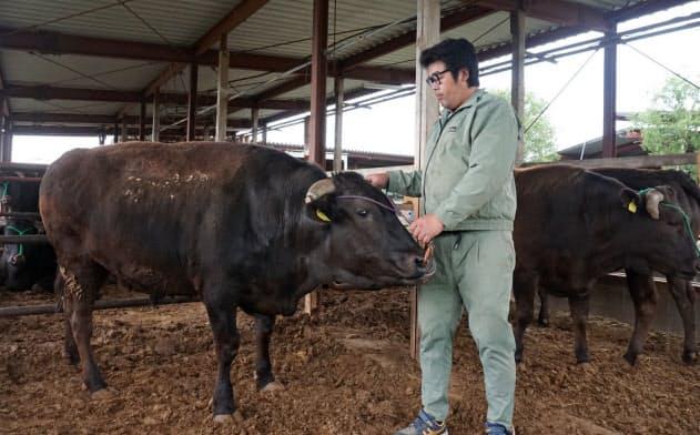 中西牧場では年間70~80頭が神戸牛として認定される(神戸市西区)