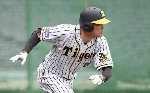 実戦形式の打撃練習で中前打を放つ阪神・福留(26日、甲子園)=球団提供・共同