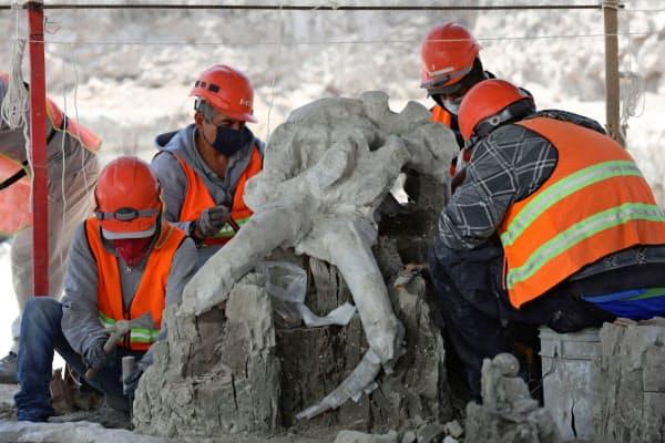 発掘されたマンモスの骨(26日、メキシコ州スンパンゴ)=ロイター
