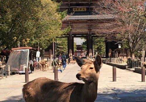 東大寺は大仏殿の中での拝観を6月1日から再開