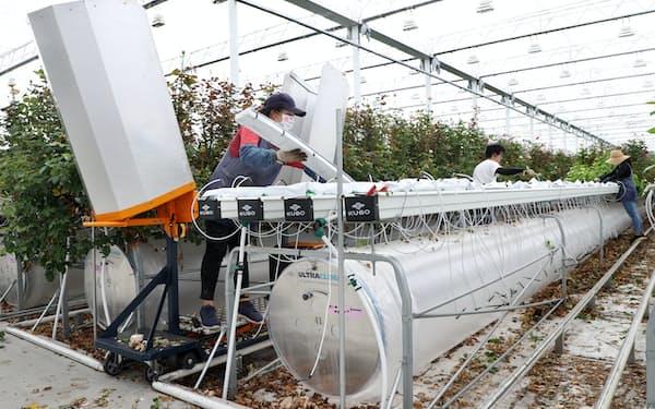 環境制御システムがバラの生育に適した条件を年間を通じ維持する=玉井良幸撮影