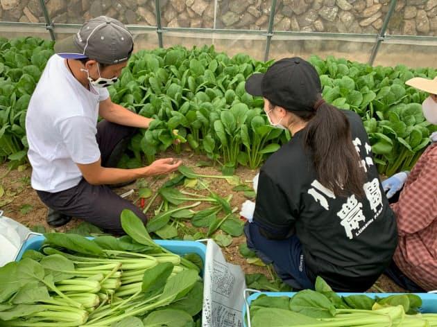 小松菜収穫のコツを旅館従業員に教える今田典彦さん(左)(5月、広島市=ルンビニ農園提供)