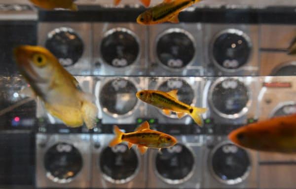 大型の水槽の中で熱帯魚が涼しげに泳ぐ(千葉県船橋市)