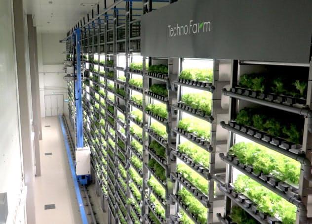 1日3万株を生産するスプレッドの最新植物工場は7割の工程を自動化(京都府木津川市)