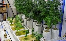 「特定技能」ベトナム人、大麻SNS販売に透ける課題