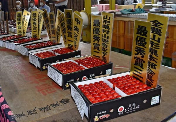 昨年は1キログラム55万円の値がついた「東根さくらんぼ」品評会