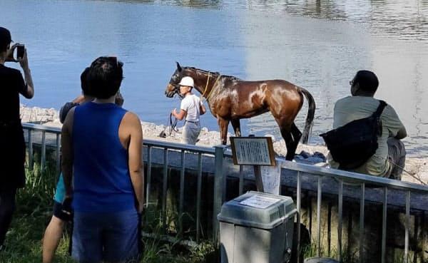 大井競馬場から脱走した馬(20日、東京都品川区)=近隣住民提供、共同