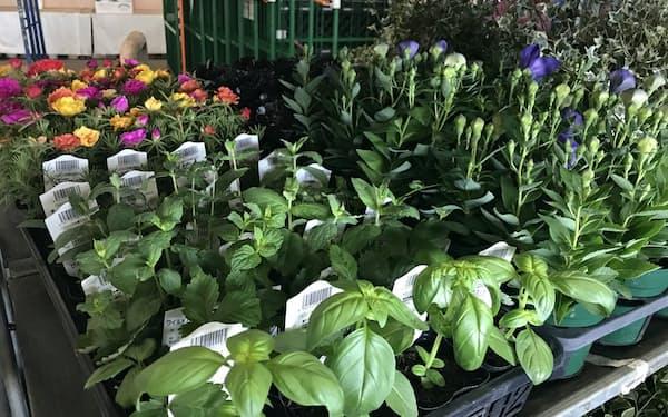 園芸用の鉢物は切り花に比べ需要は底堅い