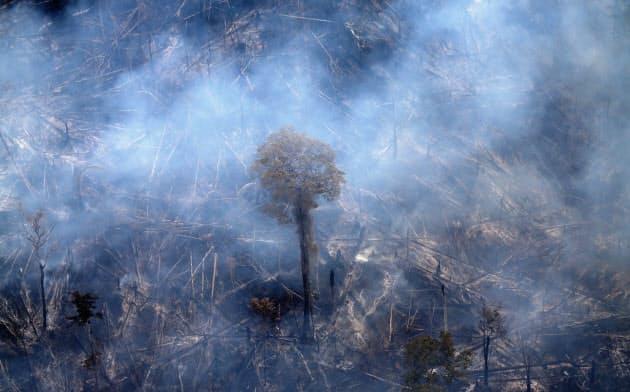 アマゾン川流域では森林破壊が進んでいる=ロイター