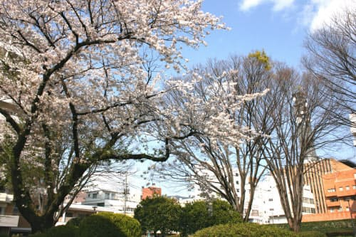 山梨県は日本人の宿泊者数の減少幅が全国より大きかった(4月、甲府市内)