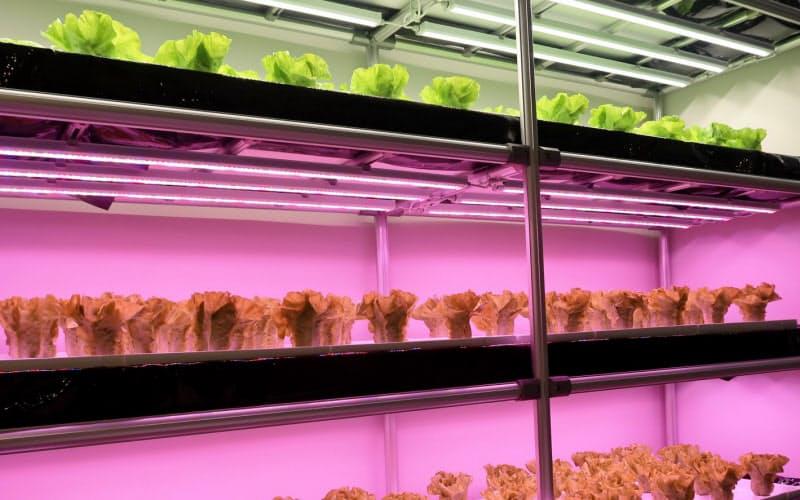 LED照明は野菜栽培など多様な分野に使われる