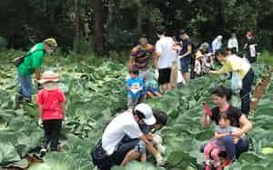 旬の野菜を収穫でき、野菜はバーベキューで楽しめる