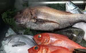 高級魚が並ぶショーケース(6月、名古屋三越)