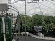 最適な栽培条件を探る野菜・花きスマートハウス(10日、山形県寒河江市の県園芸農業研究所)