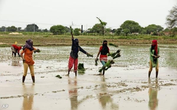 農村経済は都市部より早く持ち直す可能性がある(6月、インド北部ウッタルプラデシュ州)=AP