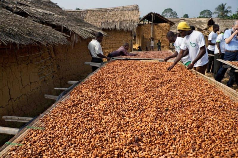 ガーナではコロナ禍でもカカオ豆の生産は順調に進む