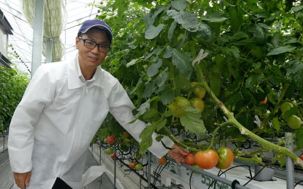 国内で初めて導入した農業用ハウス「プロファーム T―キューブ」でトマトの育成状況をみる岡田社長