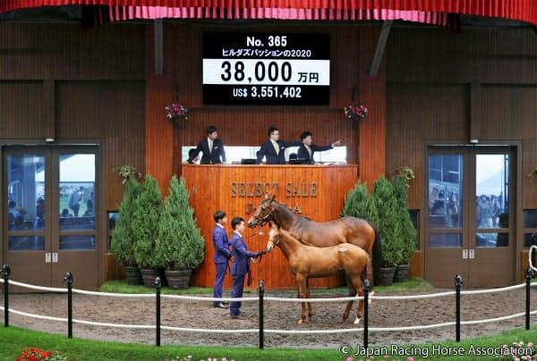 「セレクトセール2020」で3億8000万円で落札された当歳馬の「ヒルダズパッションの2020」(手前)=共同