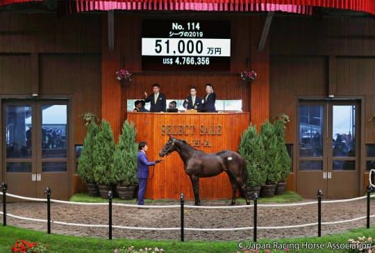 5億1000万円で落札されたディープインパクト産駒の1歳馬「シーヴの2019」=共同