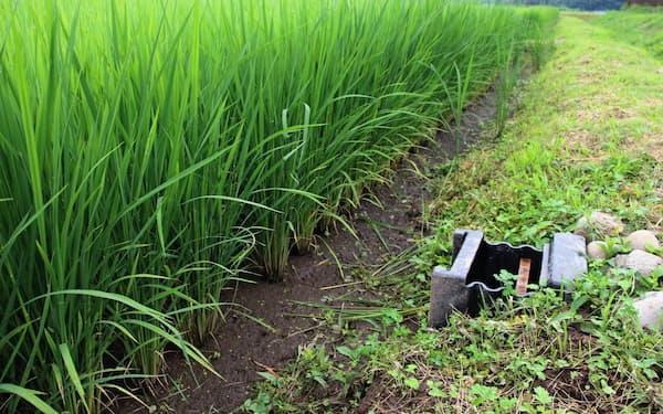 あぜに埋め込んだ調整マス(右)が田んぼからの排水のスピードを抑える(宇都宮市)