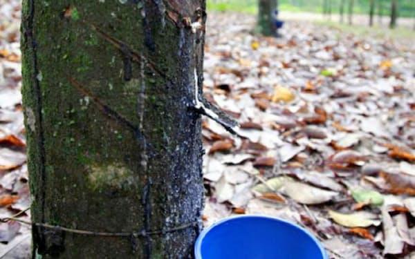天然ゴムの主産国タイでは出荷量が激減している