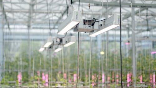床面積1万平方メートルの葉物野菜の完全人工光源型植物工場を建設した(中科三安提供)