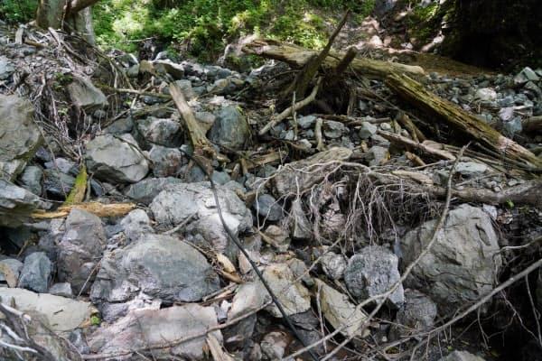 2019年の台風19号の被害で木々が散乱しているスゲノ沢(11日、群馬県上野村)