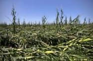トウモロコシなど多くの農作物が影響を受けた(11日、アイオワ州)=AP