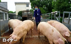 豚飼う中国マンション開発大手 株主利益より国家重視