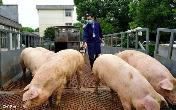中国では豚肉価格が上昇している(浙江省の養豚現場)=チャイナ・デイリー提供・ロイター