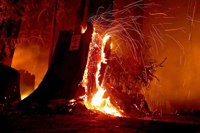 原因 山 火事