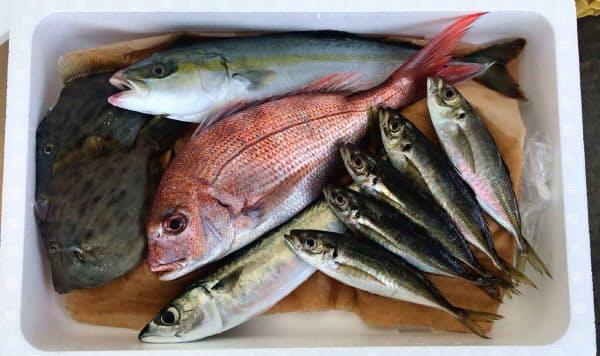 イオンリテールが販売する鮮魚の詰め合わせ。税別2500円の「小」のイメージ
