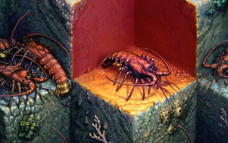 アメリカイセエビは集団生活を好む社会的な動物だが、致死的ウイルスに感染した個体は仲間から避けられる=Illustration by Nick Kilner