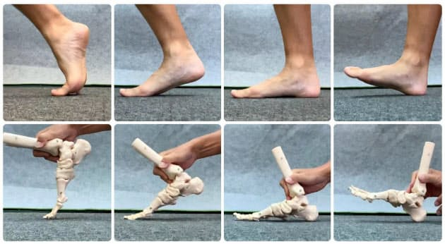 足の着地から離地までの連続写真。地面から離れる際に指がしなるのがポイント