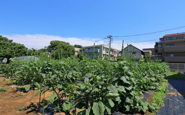 野村不動産と業務提携したJA世田谷目黒の農地。月額制の貸し出しサービスを始める