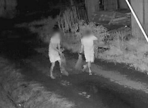 栃木県足利市の牧場で子牛が連れ去られている様子を撮影した防犯カメラの映像(22日夜、画像の一部を加工しています)=共同