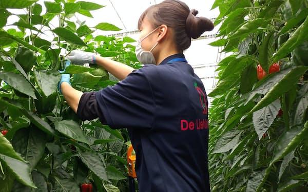 相次ぎ販路を失ったデ・リーフデ北上の野菜はネット直売で消費者のもとへ届けられた