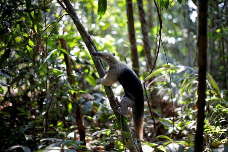 野生生物への被害が中南米・カリブ海地域で最も大きかった(9月、ブラジル)=ロイター