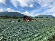 群馬県では畑に植えた野菜などの被害が報告されている(8月)