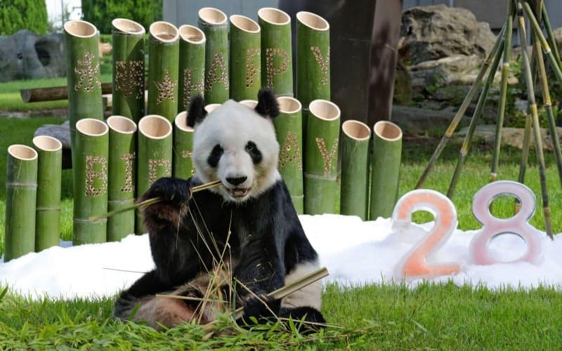 28歳の誕生日を迎えたジャイアントパンダ「永明」(14日午前、和歌山県白浜町の「アドベンチャーワールド」)