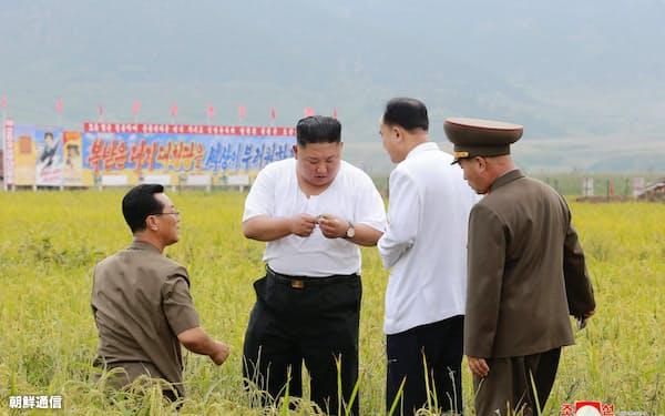 水害に遭った農場を視察する金正恩氏。12日に報じられた=朝鮮通信